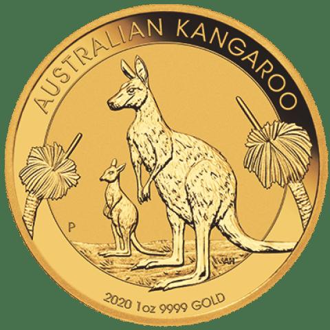 Australian Gold Kangaroo