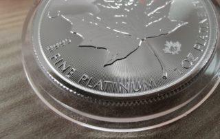 Platinum Maple